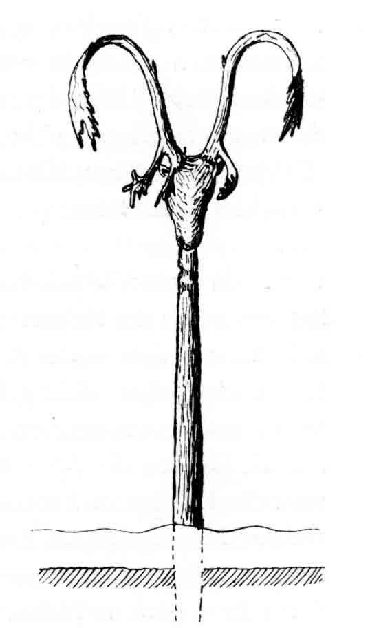 Pfahl-mit-Rentierschaedel