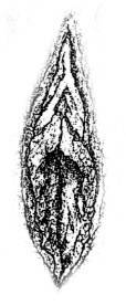 Vulva1.